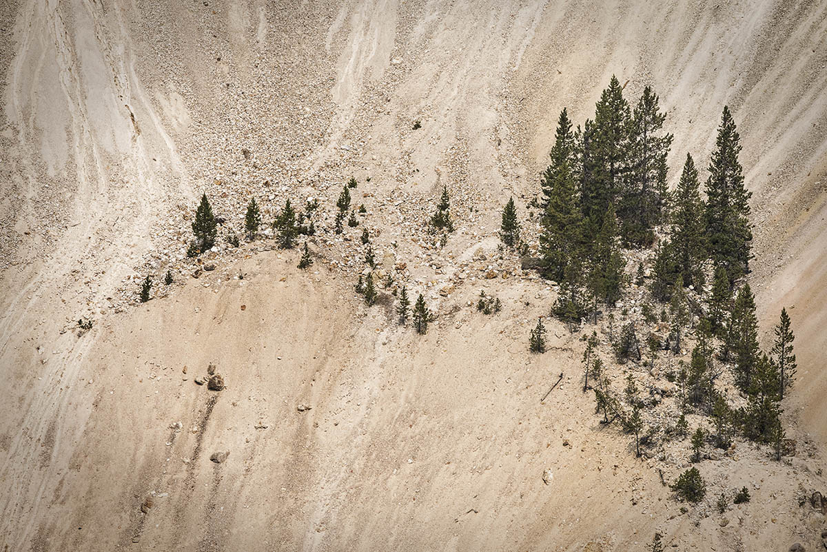 Trees growing on the steep face of Yellowstone Canyon in Wyoming