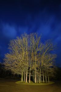 Copse On Blue