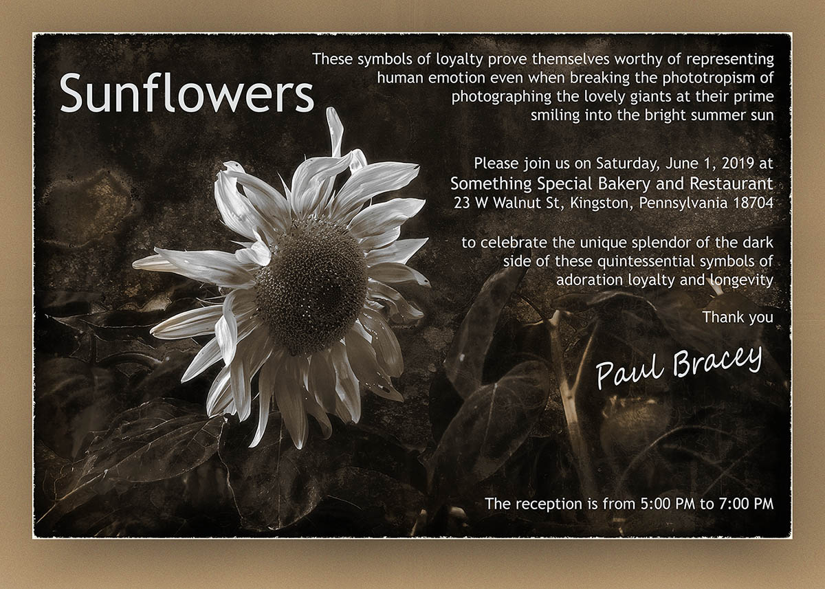 Invitation to the 2019 Sunflower Show