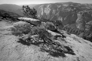 Sentinel Dome Pine Shadow